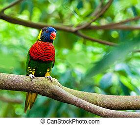 eksotiske, naturliv, branch, papegøjer, his
