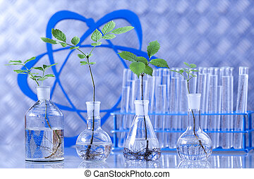 eksperimenter, hos, flora