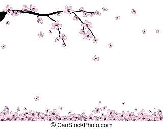 elágazik, közül, gyönyörű, cseresznye virágzik