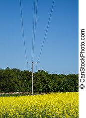 elétrico, linhas, sobre, violação, campo