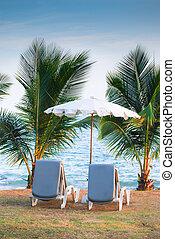 elülső, pálma, szék, tengerpart, bitófák