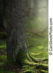 előtér, csodálatos, zöld, moha, törzs, csinos