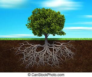el, árbol, y, rood
