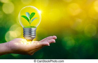 el, bosque, y, el, árboles, ser, en, el, light., conceptos, de, conservación ambiental, y, calentamiento del planeta, planta, crecer, dentro, lámpara, bombilla, encima, seco, tierra, en, ahorro, tierra, concepto