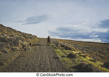 EL CALAFATE, ARGENTINA: Man riding with his dogs.