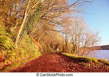 el caminar de la mujer, en, otoño, park., co.cork, ireland.