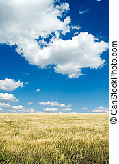 el, campo, y, sky.