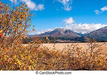 el, colores, otoño, boliche, bariloche, argentina, patagonia