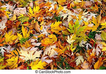 el, colorido, otoño, plano de fondo