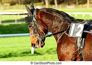 el competir con del caballo, después, el, carrera, deporte