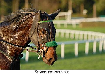 el competir con del caballo