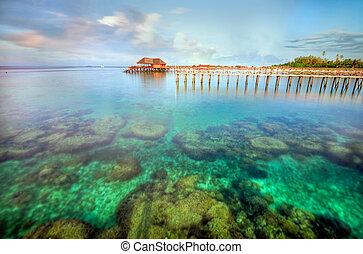 el, coral, de, isla de mabul