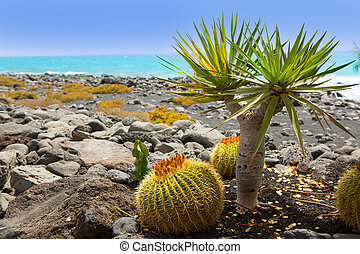 El Golfo in Lanzarote cactus at Atlantic shore