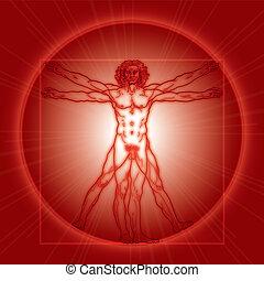 el, hombre de vitruvian, (homo, vitruviano)., rojo, version.