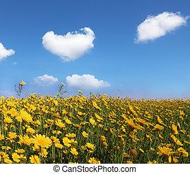 el, inmenso, campo, con, grande, flores amarillas