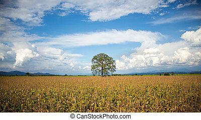 el, lejos, árbol, gran, lo