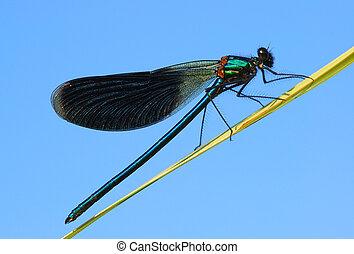 el, libélula, tiene, un, resto, en, un, plano de fondo, de, el, cielo azul
