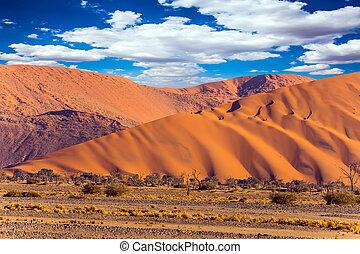 el, más, antiguo, desierto de namib