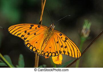 el, mariposa, en, jardín