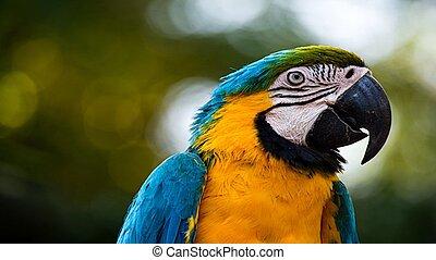 el mundo, de, salvaje, nature., animales salvajes, y, birds.