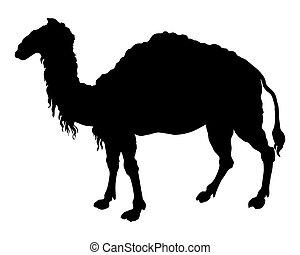 el, negro, silueta, de, un, camello, blanco