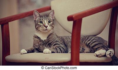 el, rayado, joven, gato, en, un, chair.
