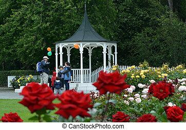 el, rosa, jardín, de, palmerston, norte, nzl