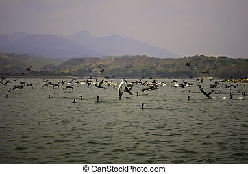 El Salvador bird sanctuary - A view of the birds in El ...