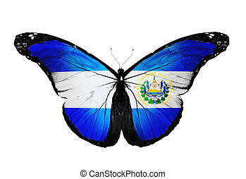 El Salvador flag butterfly, isolated on white background