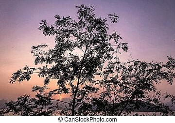 el, silueta del árbol, gradiente, cielo, sol, y, océano