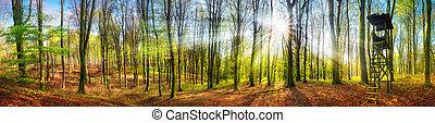 el, sol que brilla, en, un, bosque, en, primavera, de par en par, panorama