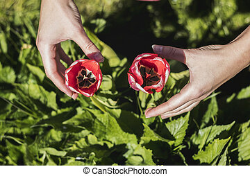 el suyo, jardín, brazos, tulipán, envuelto, alrededor