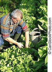 el suyo, jardín, trabajando, hombre