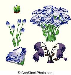 el, vida, etapas, de, flores, eustoma, púrpura, aislado, blanco, fondo., vector, caricatura, primer plano, illustration.
