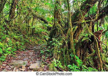 El Yungue rainforest