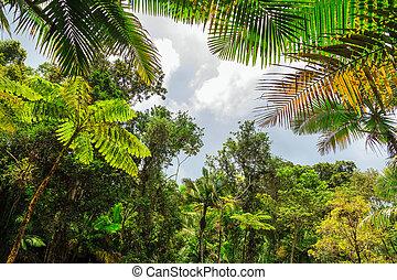El Yunque canopy
