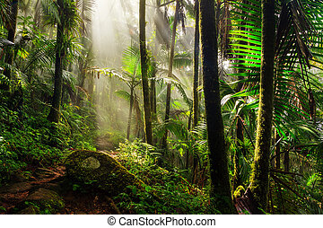 El Yunque morning light
