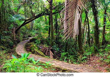 El Yunque national forest path