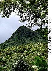 El Yunque Rain forest Puerto Rico