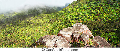 El Yunque Rainforest - Puerto Rico