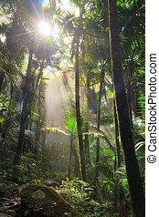El Yunque sunlight