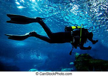 el zambullirse adentro, el, océano, submarino