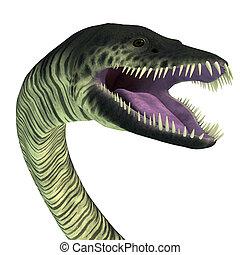 Elasmosaurus Reptile Head