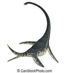 Elasmosaurus Reptile Tail