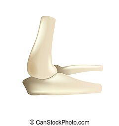 Elbow joint isolated on white vector illustration
