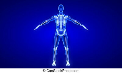 Elbow Pain animation - front view. Blue Human Anatomy Body ...