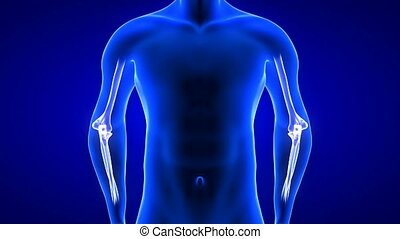 Elbow Pain animation front view close-up. Blue Human Anatomy...