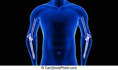 Elbow Pain animation front view close-up. Blue Human Anatomy Body Hologram. 3D Scan render - seamless loop on black background