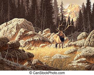 elch, yellowstone