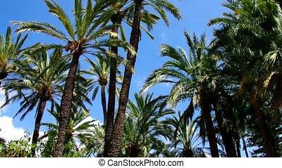 Elche El Palmeral, palm grove near Alicante, Costa Blanca